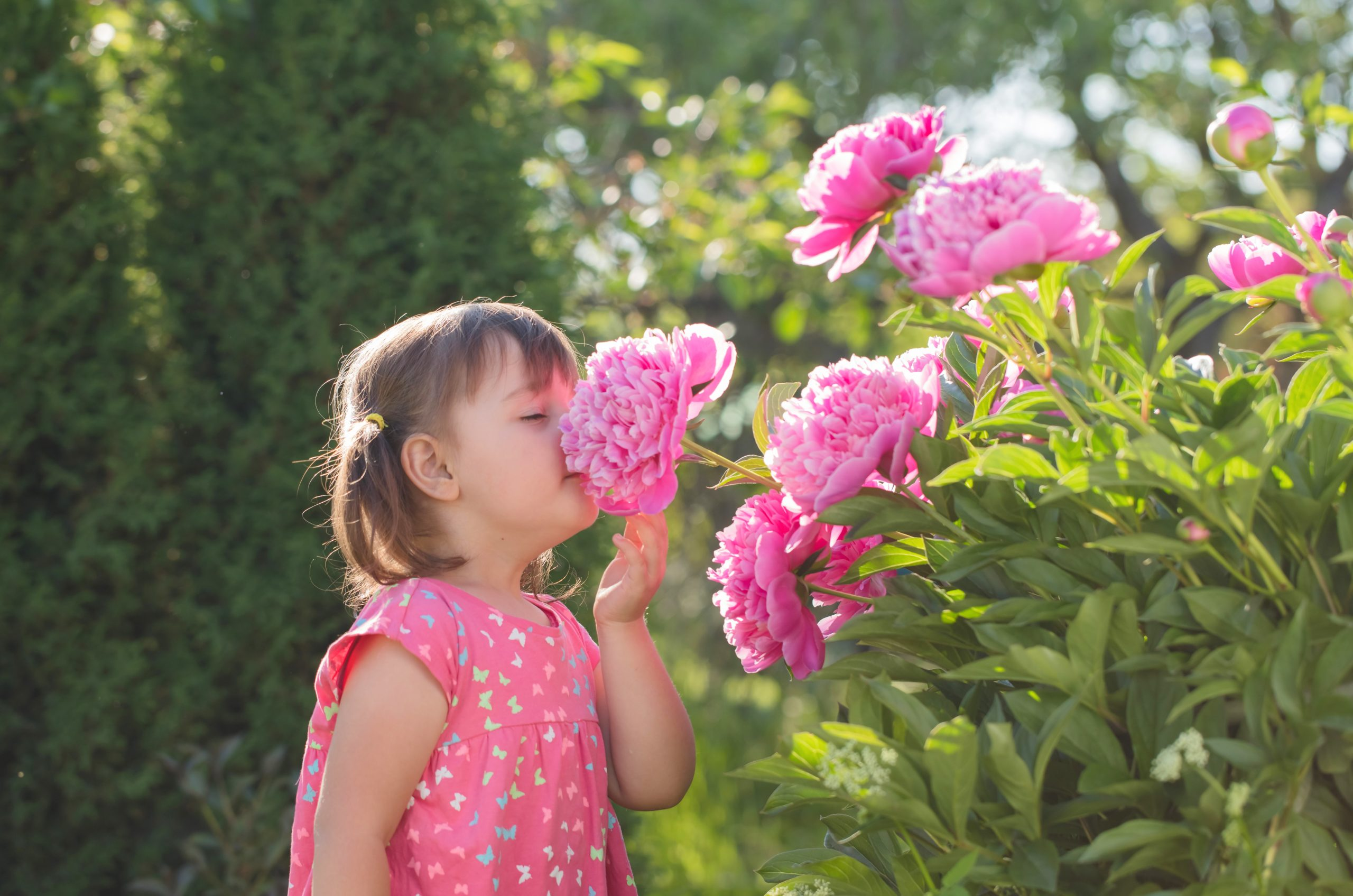 Little Girl Smelling a Peony